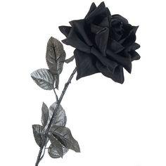 Rosa De Tela Negra