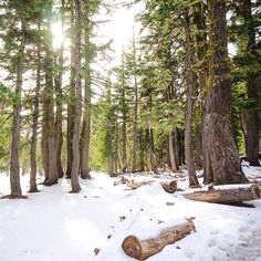 Snow in the Central Oregon woods ------------------- @ makenziea