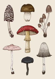 illustration of various mushrooms. Stylistically I was inspired by natural history and botanical illustrations. I hand drew each mushroom, then coloured each one on Photoshop. Botanical Drawings, Botanical Prints, Botanical Tattoo, Illustration Inspiration, Eye Illustration, Astronaut Illustration, Illustration Animals, Mermaid Illustration, Rabbit Illustration