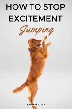 Dog Training Techniques, Dog Training Tips, Training Videos, Brain Training, Jumping Dog, Excited Dog, Cat Dog, Dog Care Tips, Dog Hacks