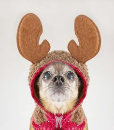 10 Holiday-Related Dog Names | Dogster, courtesy of DoggieNames.com!