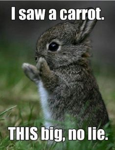 Here Are 20 Animals That Think Theyre People. I Cracked Up So Hard LOL! - Funny Animal Quotes - - 20 Funny Animal Pictures With Captions The post Here Are 20 Animals That Think Theyre People. I Cracked Up So Hard LOL! appeared first on Gag Dad. Cute Animal Memes, Funny Animal Quotes, Cute Animal Pictures, Cute Funny Animals, Funny Cute, Funny Pictures, Super Funny, Animal Pics, Animal Humor