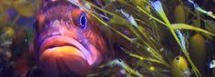 The Newport Aquarium is just 20 minutes away from Bella Beach.