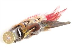 Young and Country Feather Shooting Brooch