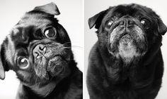 Projeto fotográfico retrata o envelhecimento de cães em resultado comovente