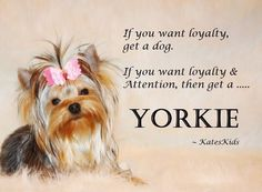 Loyalty & Attention