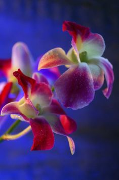 Orchids: Orchids have long been a symbol of love and beauty.