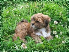 My Lhasa Apsos: home is cuddling with my puppies http://media-cache7.pinterest.com/upload/38632509273014328_izWCY5kp_f.jpg ashleynicolephotographer what home means to me
