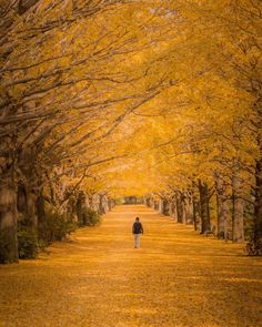 昭和記念公園 Tokyo, Japan by Yukihito Ono