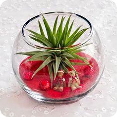 Cute Christmas idea for air plants