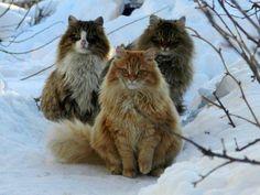 Neighbourhood cat gang.. hehe