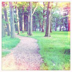 Trail at dusk.