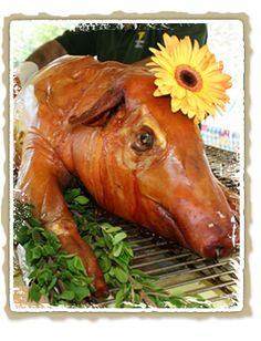 Pig roast for our rehearsal dinner! Pig Roast, Our Wedding Day, Wedding Ideas, Summer Parties, Rehearsal Dinners, Wine Recipes, Catering, Cow, Animals