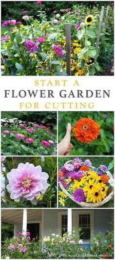 Best flowers for all-summer color! LOTS of blooms, great for cutting, easy to start!