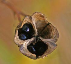 Frø - Seeds | Randi Hausken