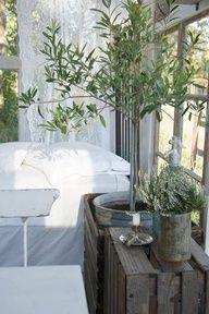 Grote olijfplant in je slaapkamer.