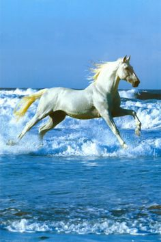 The white Horse over the brave Waves