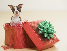 Pets as Gifts? What to Think About First - Pet Parenting Tails column on Poway Patch