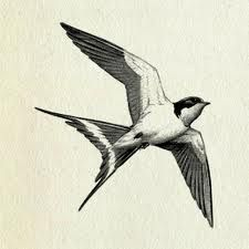 vintage bird illustrations - Buscar con Google