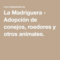 La Madriguera - Adopción de conejos, roedores y otros animales.