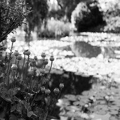 Black Monet #garden #giverny #jardindemonet #nature #coquelicot #normandie #monet #impressionism #bokeh #leica #leicaq #leicacamera #leicaimages #bw #bnw #blackandwhite #nb #bw_lover #explore #wander #noir #detail #light