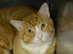 Sweet Simba needs a new home  he was deserted by family. Hes at the nyc ms. A1031440