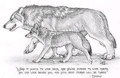 wear wolf quotes and pictures Wolf Photos, Wolf Pictures, Werewolf Quotes, Lone Wolf Quotes, Wolf Qoutes, Wolf Stuff, Wolf Spirit Animal, Wolf Love, She Wolf