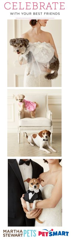Introducing the #MarthaStewartPets Wedding Collection! Everything you need to celebrate with your best furry friends - only @petsmartcorp
