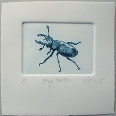 Hand printed with etching ink on Somerset cotton rag paper, Stag Beetle is from a larger body of work studying Devon Hedgerows. This lovely bug has been printed in a small edition of just Each print is hand pulled by me. The x plate is inked with quality Engraving Printing, Stamp Printing, Drypoint Etching, Jobs In Art, Handprint Art, Textile Fiber Art, Insect Art, Elephant Print, Giclee Print