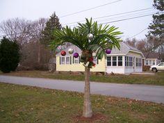 Christmas 2012-West Island, Fairhaven, MA