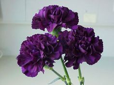 Linds - Carnations, when done en masse can look ah-mazing.  And they smell nice too.  These are beautiful lush purple.  (Linds - Delete this if you don't like it)