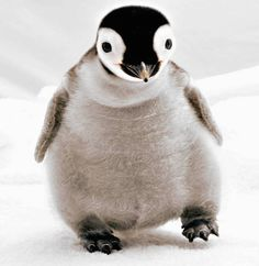 15 Precious Penguins Remind You To Celebrate Penguin Awareness Day