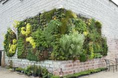 brick wall with plants growing vertically in a planter on the corner