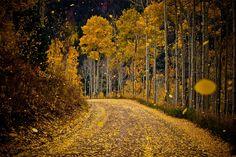 Falling Leaves. #AspenTrees #Colorado #Fall