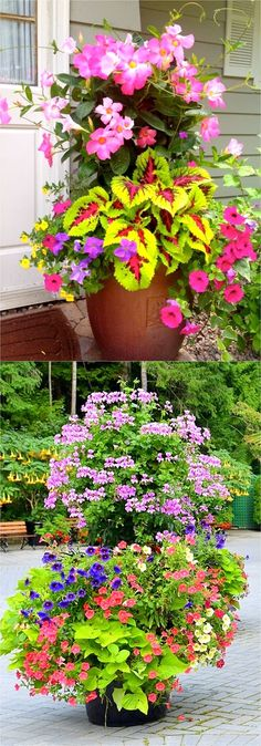 garden pots Colorful flower gardening in pots made easy with 38 best designer plant list for each container and sun vs shade locations. Grow a beautiful flower garden with these proven combinations and success tips! - A Piece of Rainbow Organic Gardening, Gardening Tips, Flower Gardening, Succulent Gardening, Gardening Gloves, Home Vegetable Garden, Garden Pots, Potted Garden, Beautiful Flowers Garden