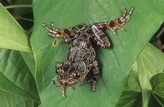 Red-legged Running Frog - Africa Cute Creatures, Beautiful Creatures, Animals Beautiful, Cute Animals, Amazing Frog, Poison Dart Frogs, Funny Frogs, Tortoise Turtle, Green Frog