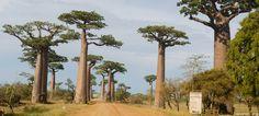 Un nouveau branding, Madagascar, l'île au trésor, pour appuyer la promotion de…