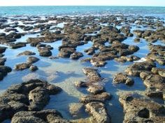 Stocking Island Stromatolites