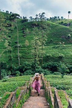 The tea plantations in Sri Lanka are just one of the many reasons to visit this stunning country!