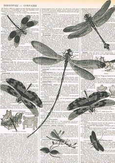 Dragonflies.Book Page Print.Vintage