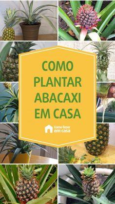 Como plantar abacaxi em casa | Como fazer em casa Como Plantar Banana, Landscape, Plants, Halloween, Small Space Gardening, Hydroponic Gardening, Gardening Tips, Lavender Plants, Horticulture