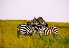 Tanzania. The Ngorongoro Crater, Tanzania. http://www.thesafaricoltd.com/index.php/safari-catalogue/tanzania-overview-spoilt-for-choice