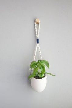 Planta en Pequeño Pot Colgando en la pared con la cuerda: