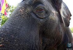 Activists claim victory over end to elephant rides at fair - The Bakersfield Californian