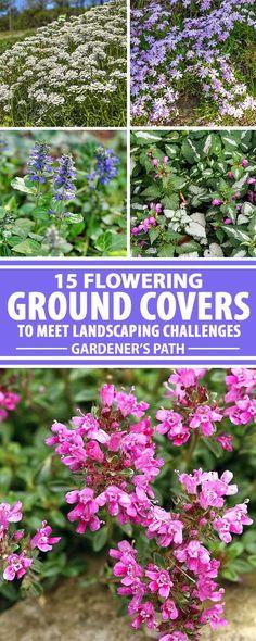 Low Maintenance Landscaping, Low Maintenance Garden, Landscaping Plants, Front Yard Landscaping, Backyard Patio, Landscaping Ideas, Sloped Backyard, Sloped Garden, Backyard Playground