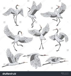 Set White Cranes Different Positions Collection Stock Vector (Royalty Free) 1362003398 Crane Drawing, Fly Drawing, Japan Tattoo Design, Japanese Bird, Japanese Crane, Crane Tattoo, White Crane, Illustration, Animal Sketches