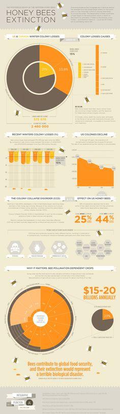 honeybee population collapse
