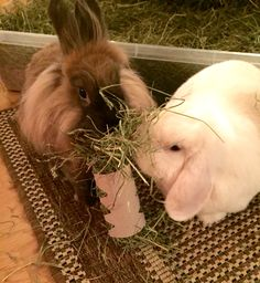 Stuff toilet roll tubes with hay to make fun games for your rabbits ‪#‎FibreFriday‬
