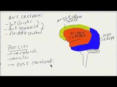USMLE Tutorial: Vascular Supply To The Brain