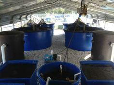aquaponic tanks | Four 800-gallon tanks are used for the basic AES aquaponics system.